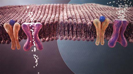 Anti-diabetic agents: Pharmacognosy